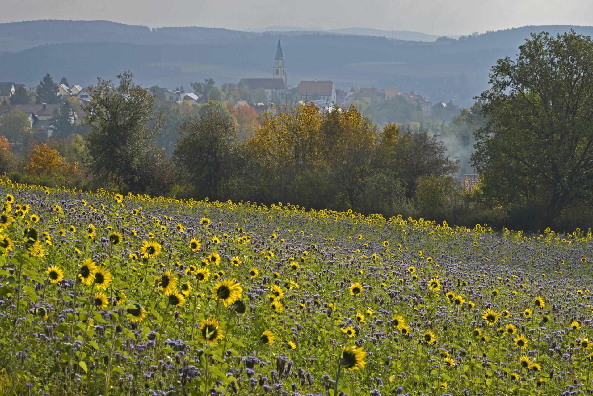 Mittelalterliches Nabburg